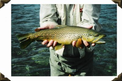 Bighorn River Wyoming - Brown, Summer, 2002