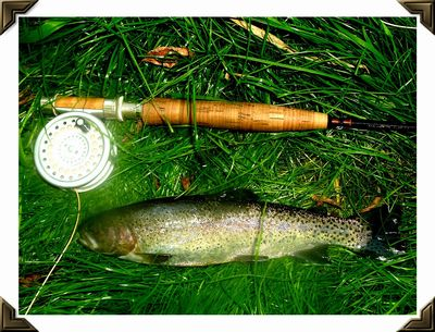 Spring Creek trout are great fun on a 3-wt. rod.